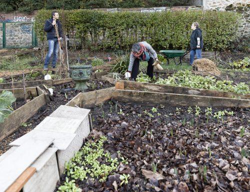 Rentrée jardinière et mulch