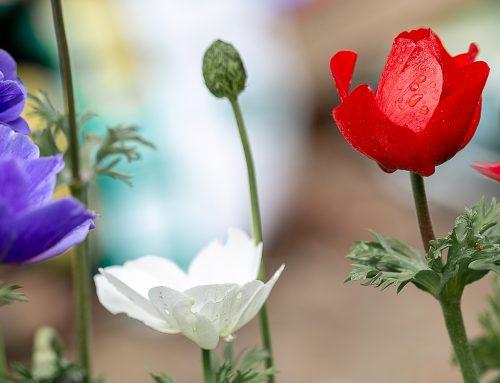 Le jardin valeur refuge ?